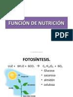 nutrición firme
