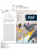 Aves Endemicas de Canarias