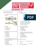Examen 01 de Biologia Para Sexto de Primaria
