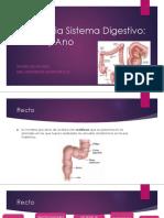 Anatomia Digestiva