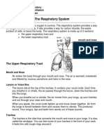 respiratory-system-pdf.pdf