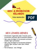 236399010-Gen-Kromosom-Kelamin.ppt