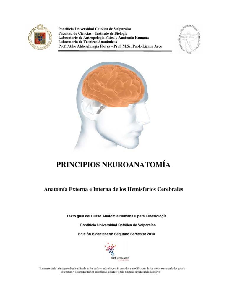 Neuroanatomia de Hemisferios Cerebra Les Kine PUCV 2010