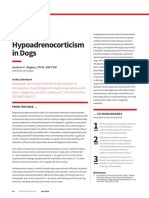 Atypical Hypoadrenocorticism in Dogs