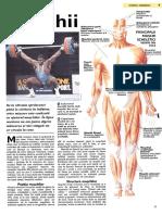 Muschii.pdf