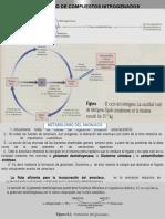 MET.compuestos Nitrogenados 8