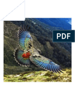 New Zealand Kea is a Large Species of Parrot
