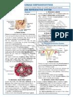 3 Human Reproduction-notes
