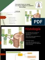HISTOLOGIA (1).pptx