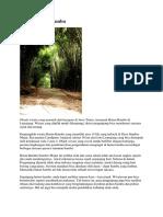 Wisata Hutan Bambu Lumajang