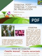 Cosecha Post-cosecha y Costos de Producción