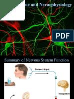 Nervous System Fundamentals