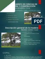 Árbol de Copal