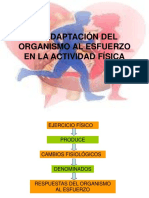 adaptacindelorganismoalesfuerzo-100303090040-phpapp02