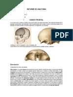 Informe de Anatomia