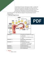 Embriogenesis.docx