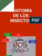 ANATOMÍA INSECTIL