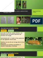 Insectos Plagas Lepidópteros