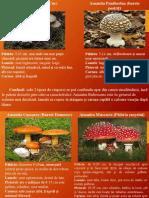 Ciuperci comestibile vs C. otrăvitoare