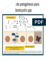 Modelo de patogénesis para Blastocystis spp.pptx