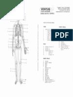 Esqueleto Humano Con Númeración Codificada de Los Huesos.2