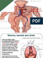 Anatomi Kardiovaskuler Tk I