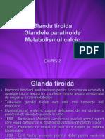 glande2