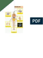 banner flip.docx