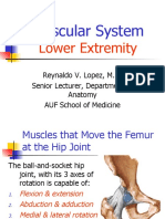 Anatomy of Muscular System - Lower Extremity