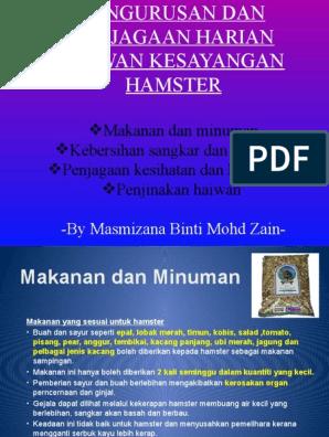Pengurusan Dan Penjagaan Harian Haiwan Kesayangan Hamster