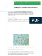 Nostoc _ Structure Different Types of Reproduction and Importance