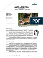 Ficha CABRA MONTES _Capra pyrenaica _.pdf