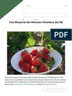 Cara menyemai strawberry
