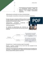 Genética 23 de Outubro.pdf