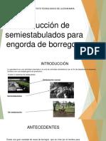 Producción de Semiestabudos Para Engorda de Borregos
