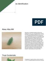 Good Coniferous Species Identification