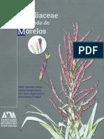 BromeliaceaeMorelos.pdf