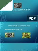 De Primate a Ser Humano