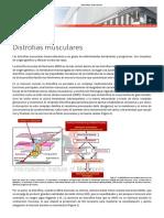 Distrofias musculares DISTROFINA