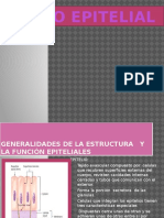 2 tejido epitelial.pptx