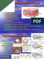 2 tejido epitelial