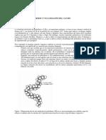 06_Caucho_y_Flexibilidad_Polietileno.pdf