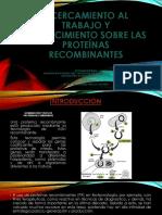 Proteína recombinante