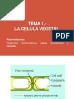 Tema 2.- La Celula Vegetal