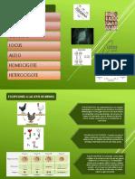 Diapositivas de Genética