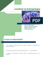 DNA Mitocondrial Antropologia Principal
