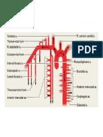 blood supply.doc