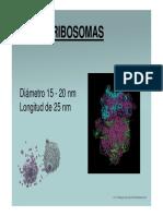 Ribosomas y RE