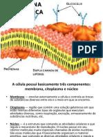 Membrana plasmtica plasmalema
