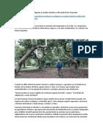 Agricultores Sicilianos Se Adaptan Al Cambio Climático Cultivando Frutos Tropicales